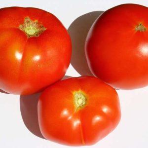 tomate goilurra